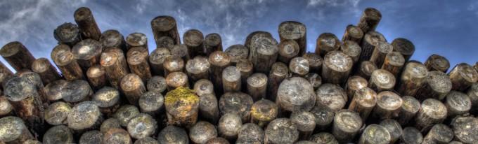 Abstract Log Texture