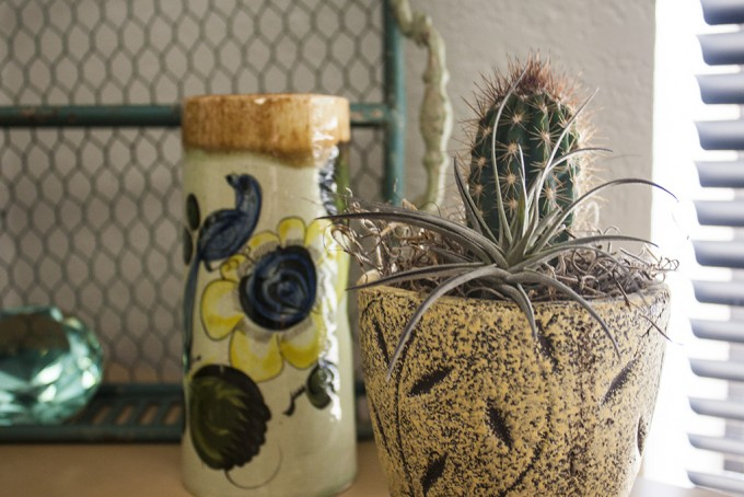 Cactus and other decorations