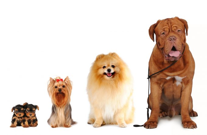 different-size-dogs