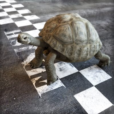 Tortoise on SEO finish line
